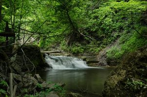 Заставки лес,деревья,водопад,природа