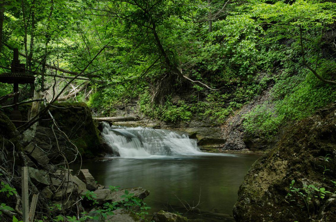 Обои лес, деревья, водопад картинки на телефон