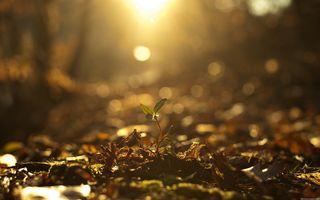 Фото бесплатно солнечный свет, падение, глубина резкости