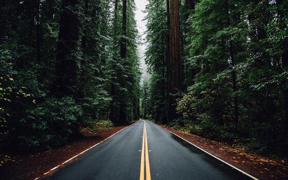 Фото бесплатно обои дорожный знак, живописный, лес