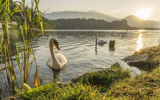 Фото бесплатно animal, dawn, daytime