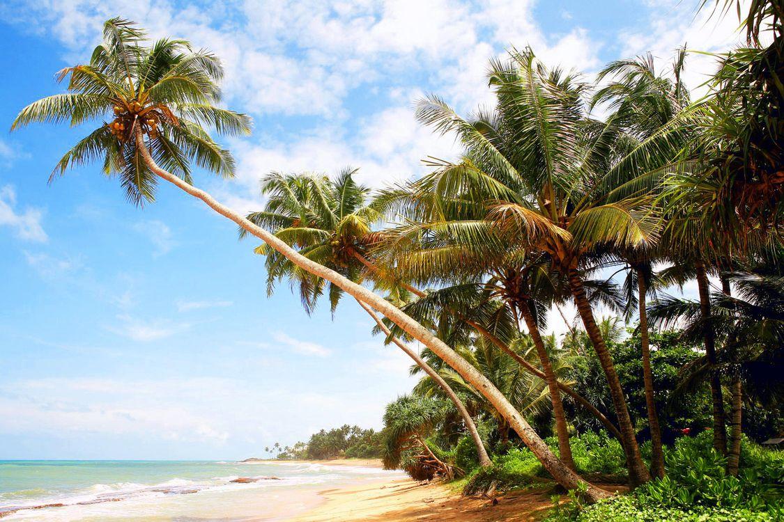 Фото бесплатно пальмы, пляж, остров - на рабочий стол