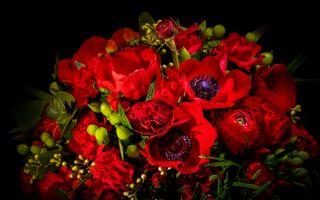 Бесплатные фото anemone,анемоны,цветок,цветы,флора,цветочная композиция,чёрный фон