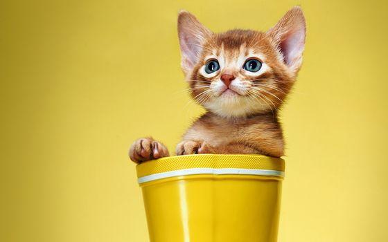Заставки сапоги, кошка, Кошки