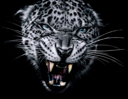 Photo free face, teeth, leopard