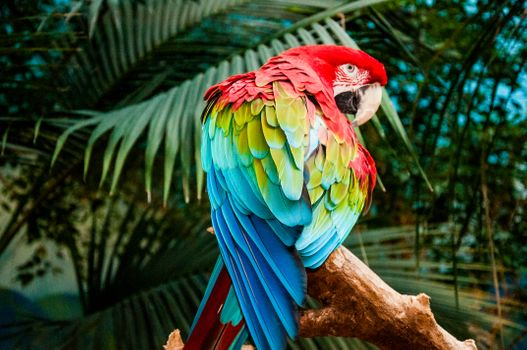 Photo free macaw, parrot, birds