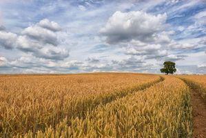 Фото бесплатно облака, дерево, уши