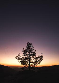 Фото бесплатно дерево, закат, горизонт