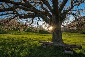 Бесплатные фото закат, поле, холмы, лавочка, деревья, цветение, весна
