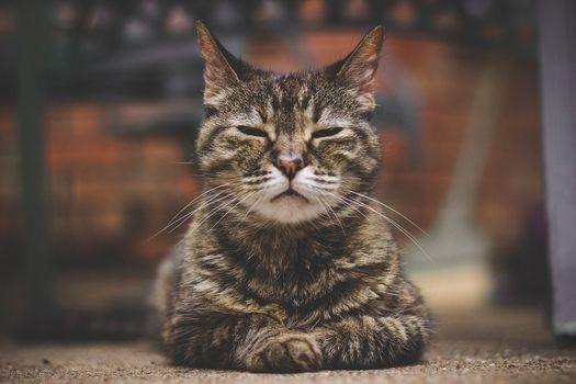 Фото бесплатно кот, сонный, лежать