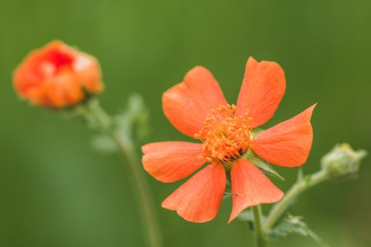 Фото бесплатно цветок, красный, макросъемка