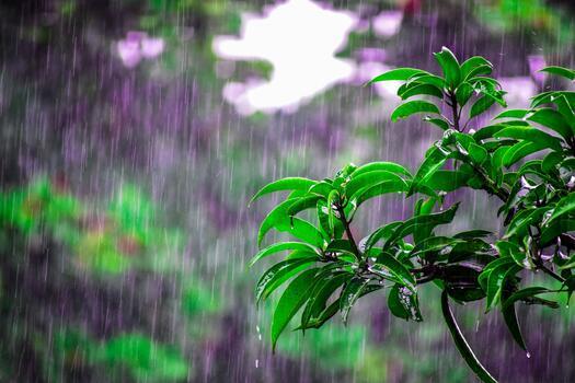 Фото бесплатно лето, зеленые листья, дождь