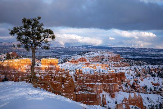 Photo free landscape, a lone tree, rocks