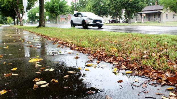 Фото бесплатно опавшие листья, осень, сырая погода