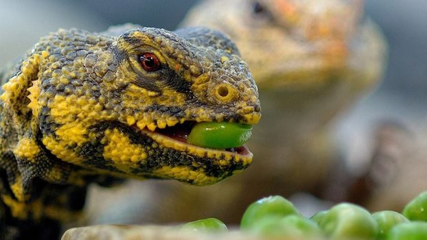 Photo free nature, lizards, green