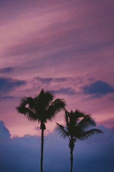Заставки пальмы, облака, деревья