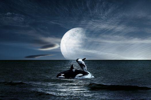 Photo free ocean, killer whale, night