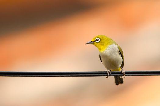 Photo free branch, bird, wing
