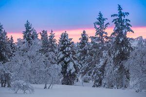 Фото бесплатно деревья, зима, Финляндия