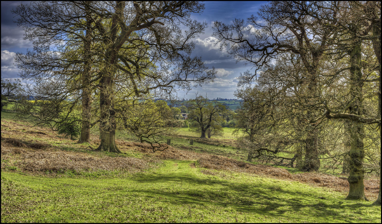 обои поле деревья, англия, холмы, пейзаж картинки фото