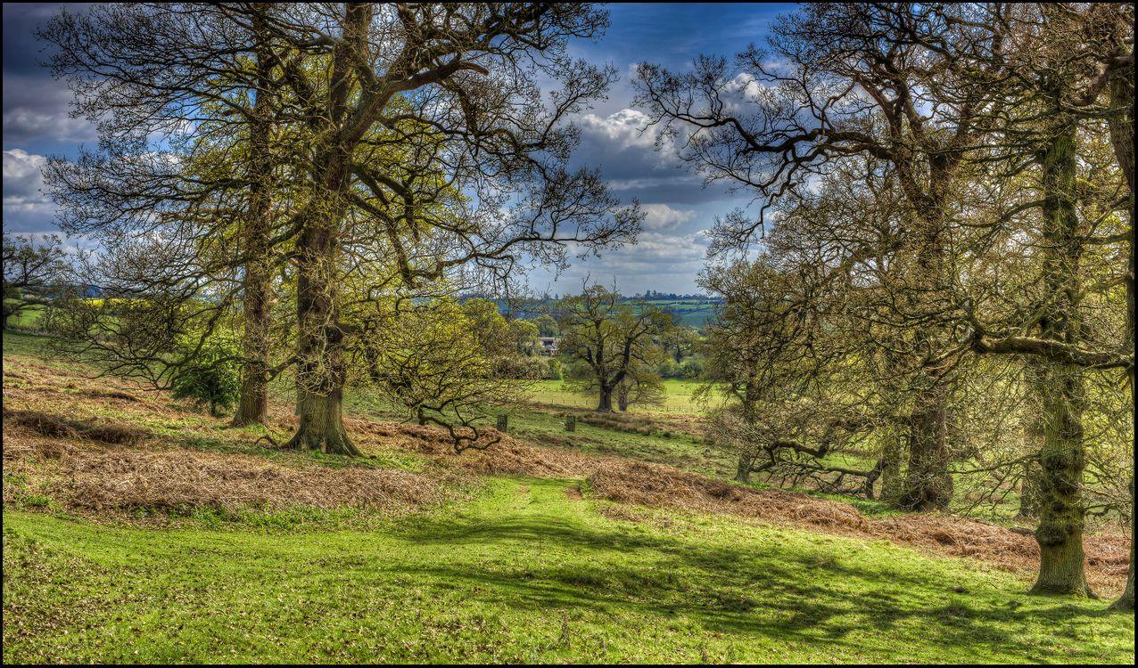 Фото бесплатно поле деревья, англия, холмы, пейзаж, пейзажи