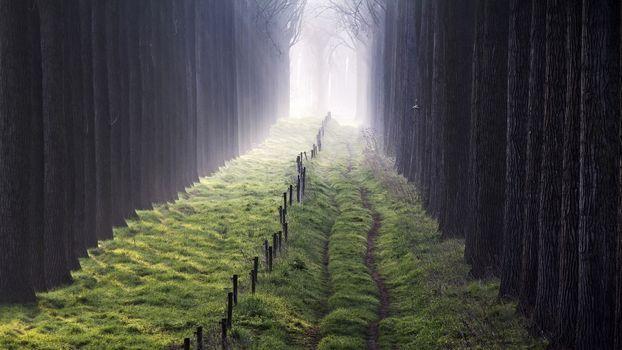 Фото бесплатно путь, свет, забор