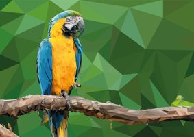 Фото бесплатно рисунок, попугай, ара