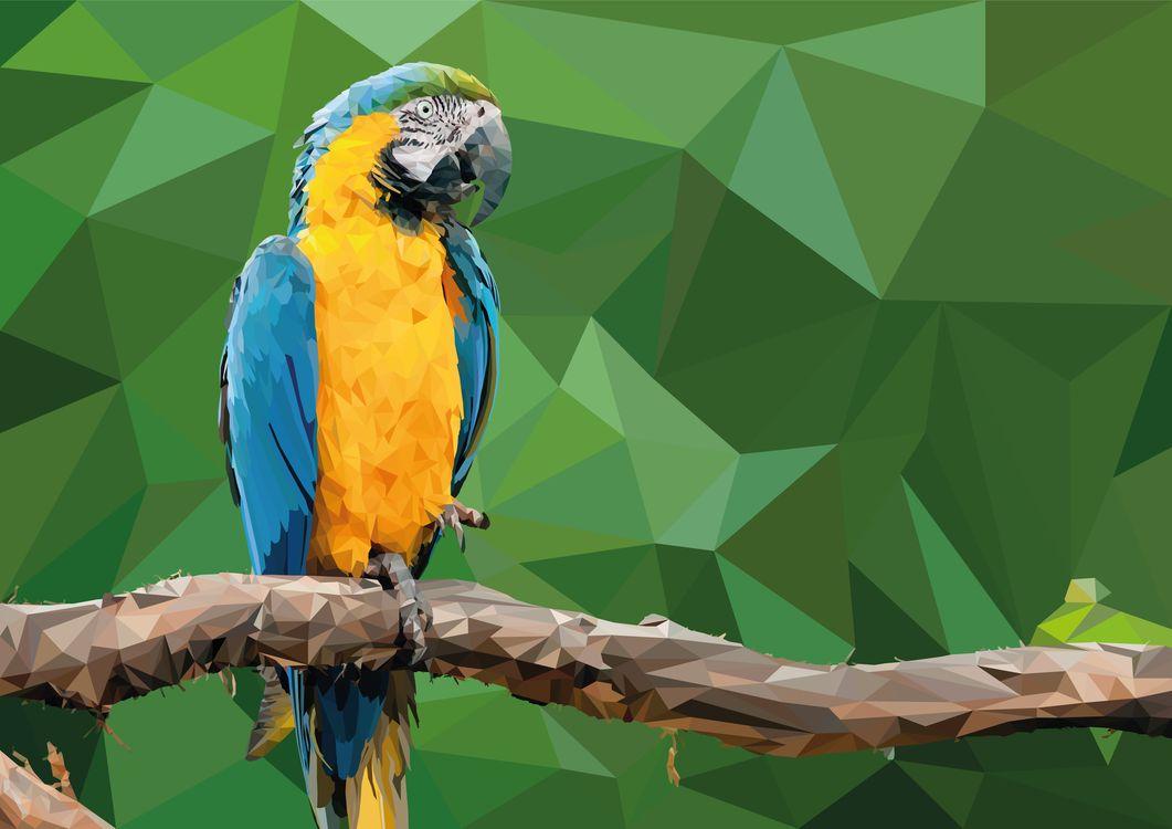 Фото бесплатно рисунок, попугай, ара - на рабочий стол