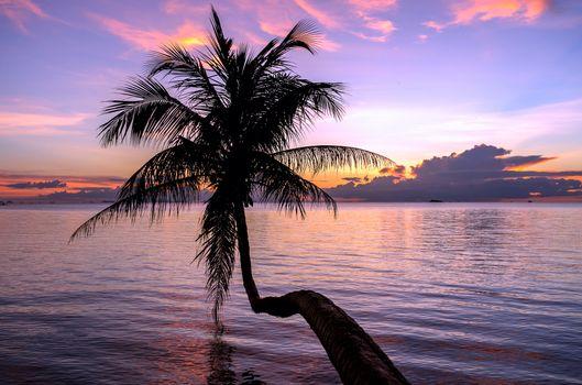 Заставки небо, пальма, море