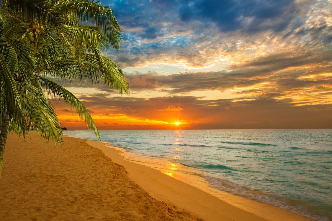 Фото бесплатно закат, пляж, Карибы, Пальма, море, волны, небо, облака, фон, фон для фотошопа, исходники, пейзаж, пейзажи