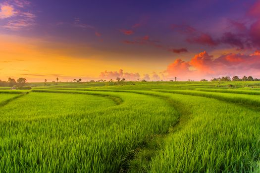Photo free green landscape, field, paddy field
