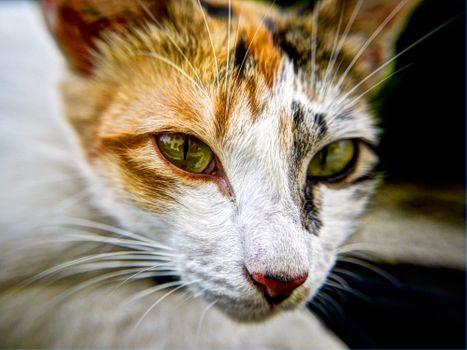 Photo free kitten, cat, feline