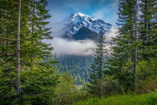 Фото бесплатно лес, лес сша, штаты сша