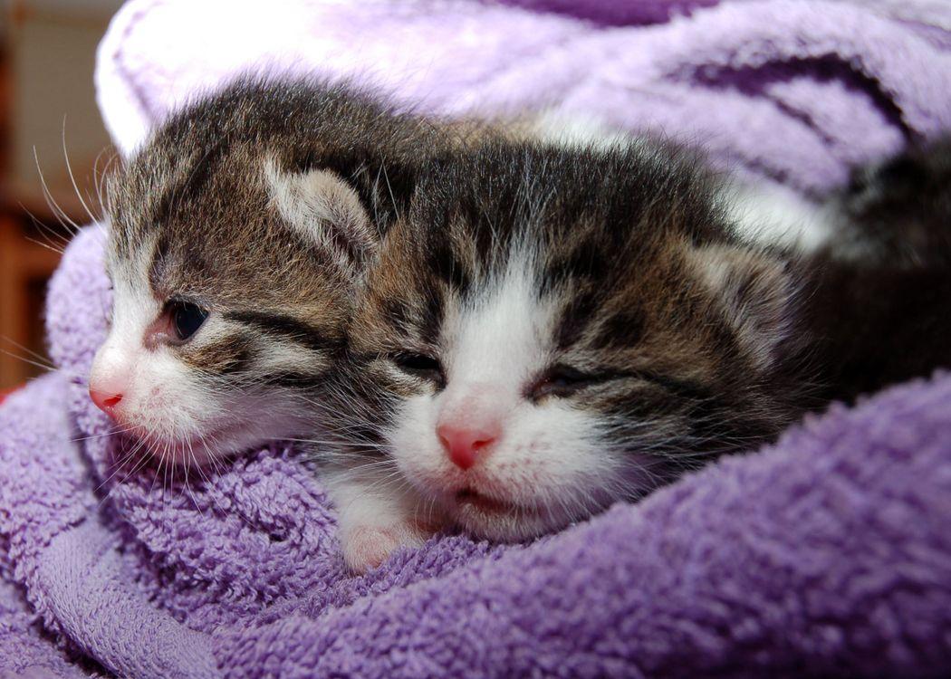Фото питомец котенок кошка - бесплатные картинки на Fonwall