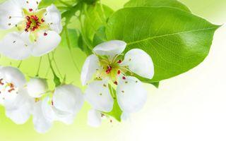 Фото бесплатно белый цветок, лепестки, бутон