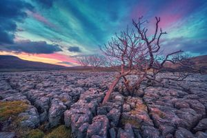 Бесплатные фото Англия,Йоркшир,известняк,дерево,деревья,грубый пейзаж,природа