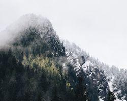 Фото бесплатно Альпы, дерево, туман