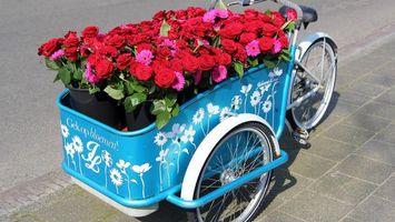 Фото бесплатно velosiped, cvety, rozy