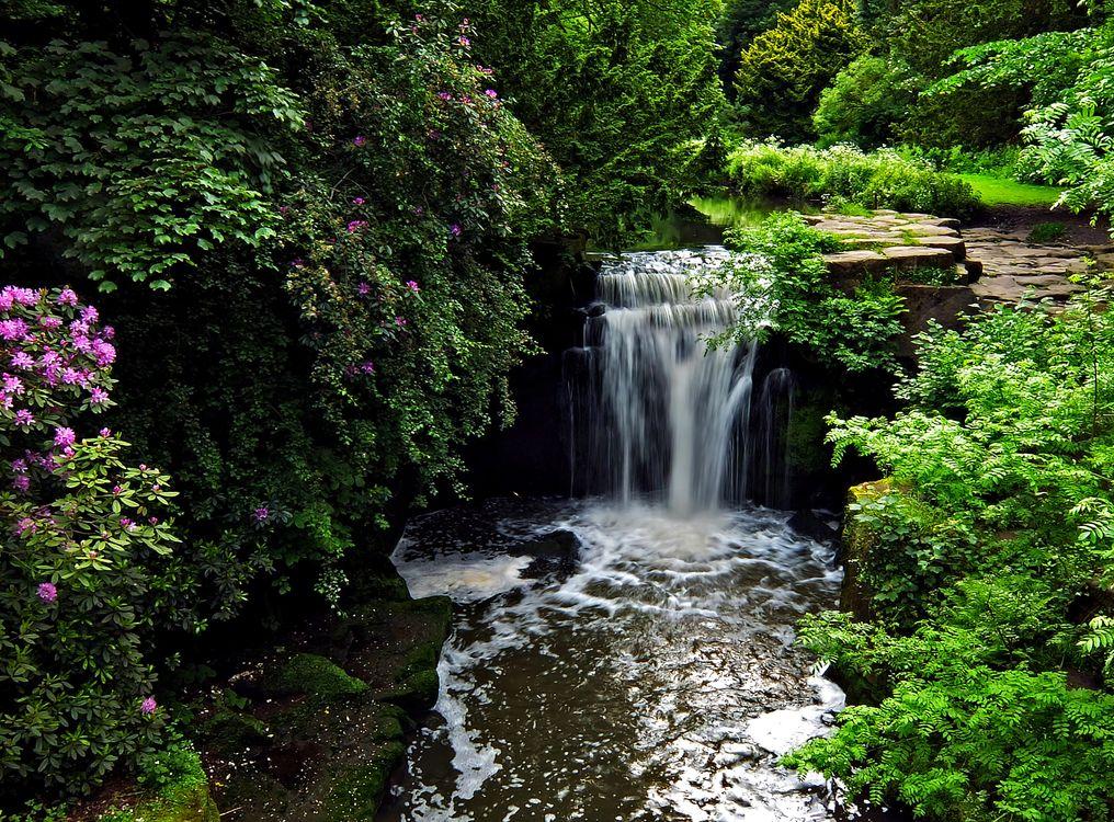 Обои водопад, Jesmond Dene Park, Ньюкасл-апон-Тайн, Англия, кусты, Newcastle, Jesmond Dene Waterfall, лес, England, Джесмонд Дене общественный парк, пейзаж на телефон | картинки пейзажи