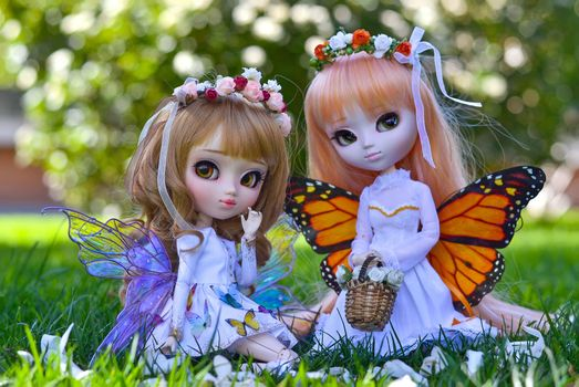 Doll butterfly · free photo