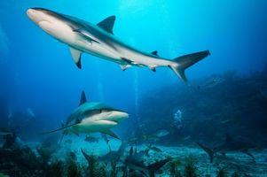 Посмотреть фото морские обитатели, акула