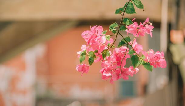 Фото бесплатно весна, стебель растения, лепесток