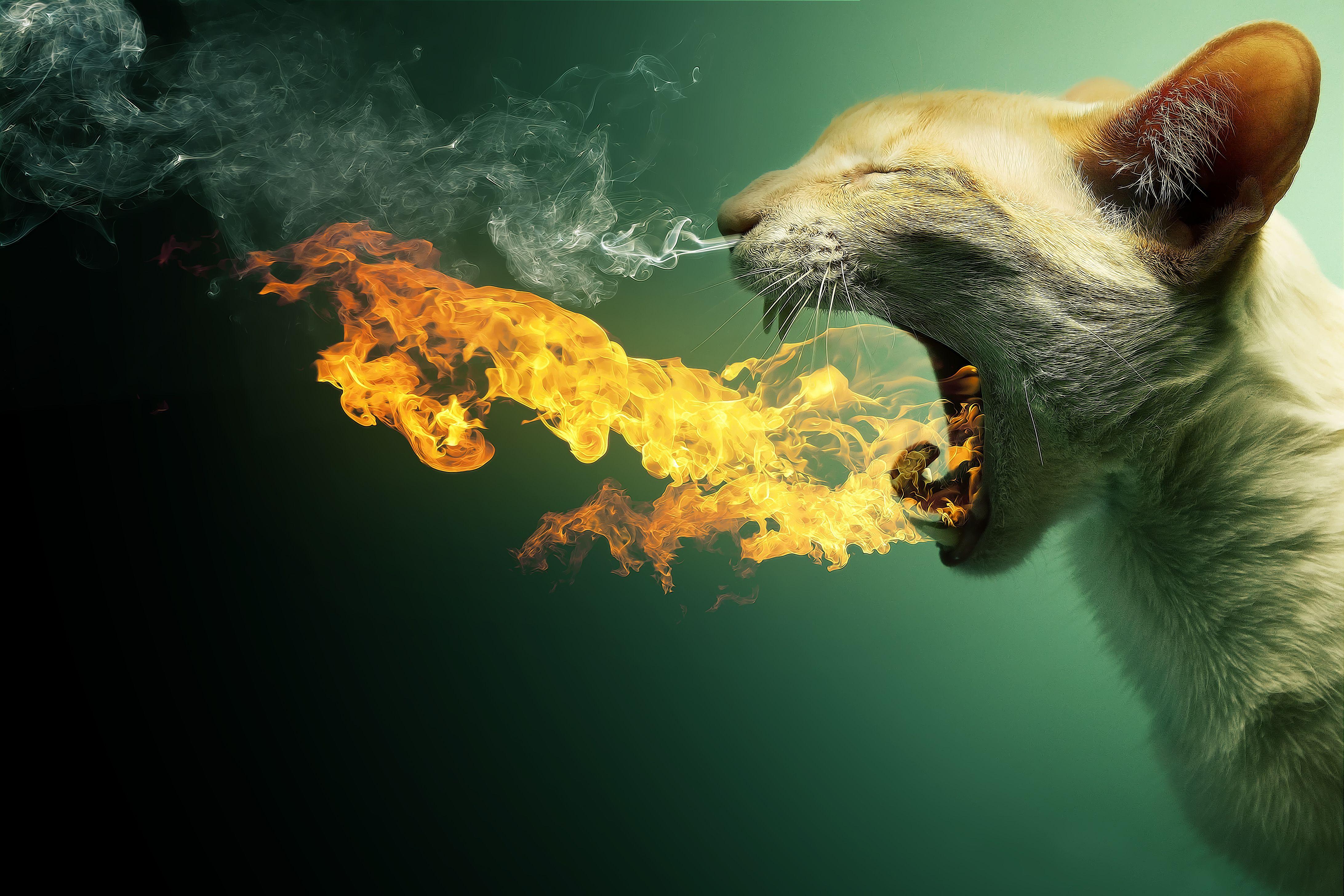 Обои кот, кошка, оскал, огонь