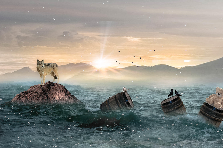 Обои закат, море, скалы, волк
