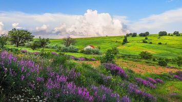 Бесплатные фото поле,холмы,лаванда,домик,деревья,цветы,пейзаж