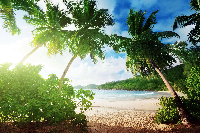 Обои тропики, море, пляж