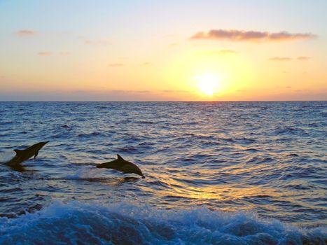 Бесплатные фото море,закат,дельфины