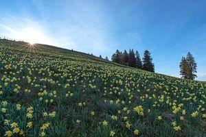 Фото бесплатно холм, деревья, цветы