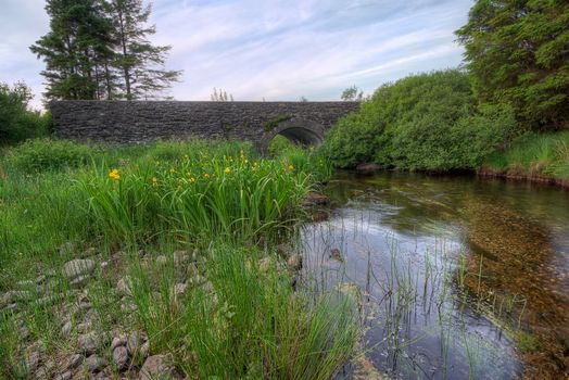 Photo free Killer Forest, Castelder, County Tyrone