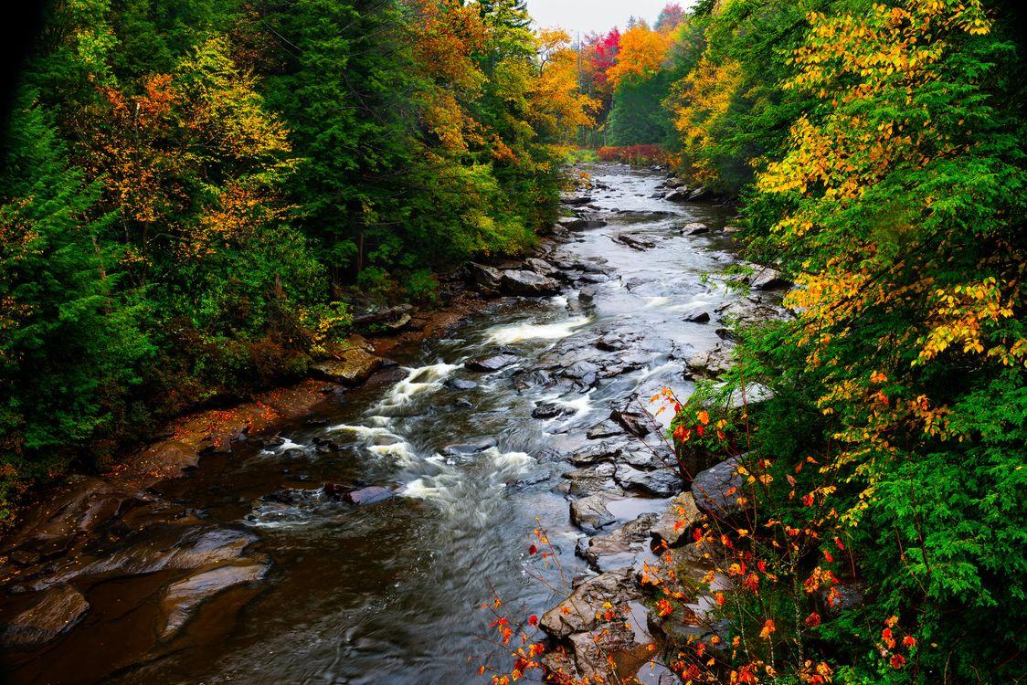 Фото бесплатно Государственный парк Блэкуотер-Фоллс, река, осень - на рабочий стол